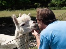 Alpaca Fetish