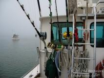 Ready to Hunt Tuna